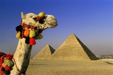 Egypt Great Pyramid Camel