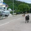 South Lantau Road At Tong Fuk