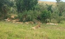 Masimba Mara 1