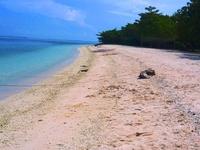 Great Santa Cruz Island