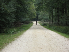 The New Forest Offers Many Miles Of Cycle Paths