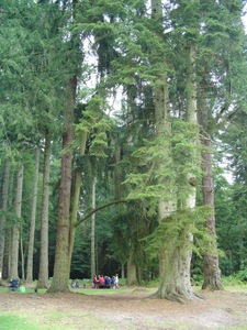 Picnic Area In The New Forest