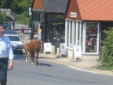 Ponies Walking The Streets In Burley
