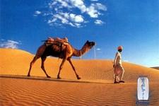 Paseo En Camello En Sinai Desierto Egipto
