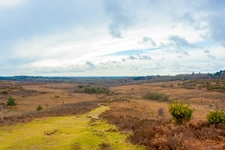 Picket Hill Is One Of The Highest Points In The New Forest