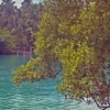 Small Lagoon On Tubabao Island