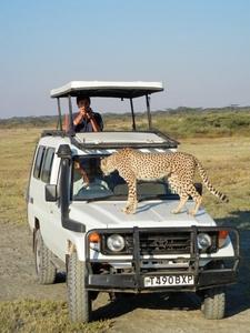 Naenda Safaris Pic
