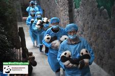 Panda Hug0113