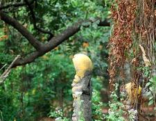 Sarpa Kavu