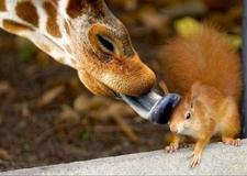Amazing Squirrel-wildlife Safaris-arend Safaris