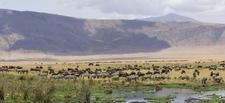 Day8 Safari Ngorongoro Crater 173498661 20 1200x550