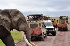 Elephant Crossing 30 Opt 1