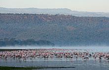 Lake Nakuru National Park 023