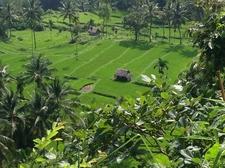 Senaru Garden
