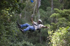 Tsitsikamma Canopy Tours Main