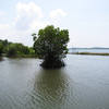 Mangroves In Ezhom