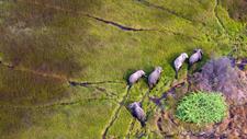2015 04 07 1428416778 1195252 Elephantsdreamstime M 18029109