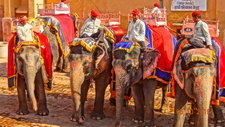 Elephant Safari In Amber Fort, Jaipur