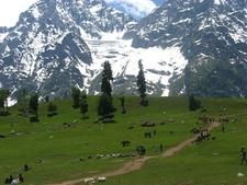 Green Valley In Kashmir