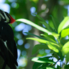 Woodpecker In Boyd Hill Nature Preserve 225 0