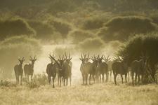 Eland | Africa&You;