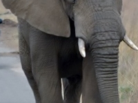 Shinzelle Safaris