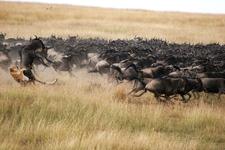 Maraplains Kenya Wildlife