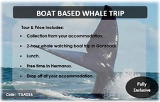 Tsa016 Boat Based Whale Trip