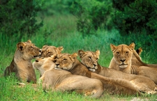 What Worldwide Tours And Safaris Says
