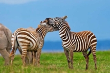 04days Kenya Majestic Adventure Holiday