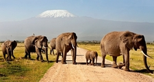 08days Kenya Migration Safaris