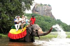 Elephant Sigiriya75