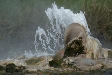 Hot Springs Semliki National Park