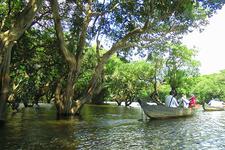 Kompong Phluk Mangrove Canoe 3 700pixel