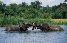 Murchison Falls National Park 018