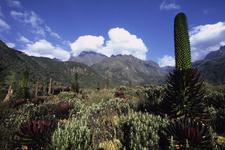 Rwenzori Mountains Np 4 Copia