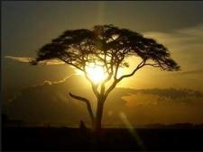 Tarangire Sunset