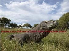 Wisata Komodo