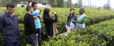 Visit To A Tea Plantation