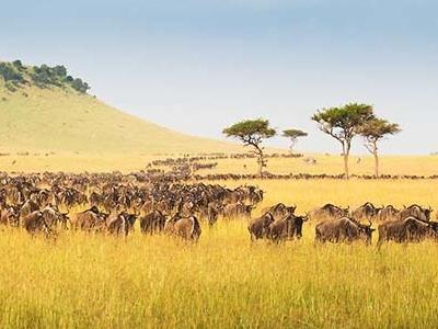 02tn72 Im9002 Serengeti Safari 900