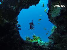 Tauchschule Hurghada Www.divingforever.com