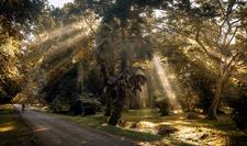 Morning Behind Angkor Wat