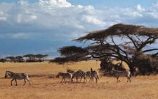 Arusha Wildlife