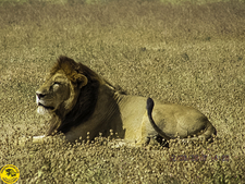 National Park Serengeti