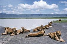 Ngorongoro Natonal Park 6 1