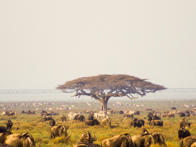Serengeti 4