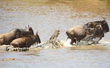 Serengeti Croc 3261496b
