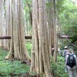 Trekking And Deep Jungle