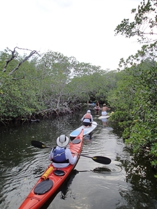 Explore The Mangrove Tunnel