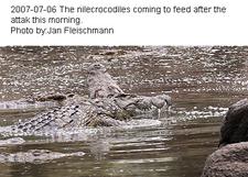 9675 Krokodilattack Efter Jf 1